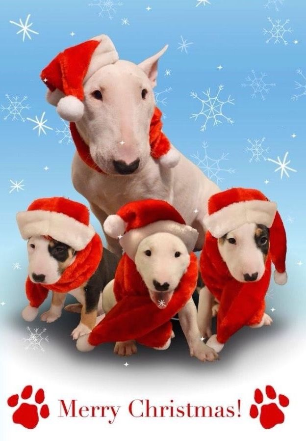 85 Best Dogs And Christmas Images On Pinterest