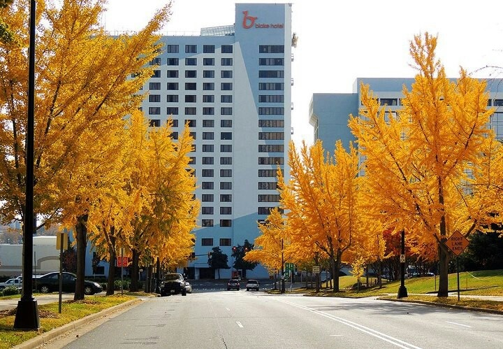 Yellow Tree Road in Downtown Charlotte NC