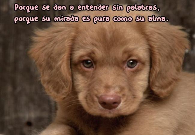 Porque se dan a entender sin palabras,porque su mirada es pura como su alma♥♡♥♡♥