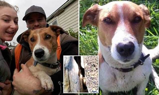 Jacko the dog survives two days stuck in earthquake crevice