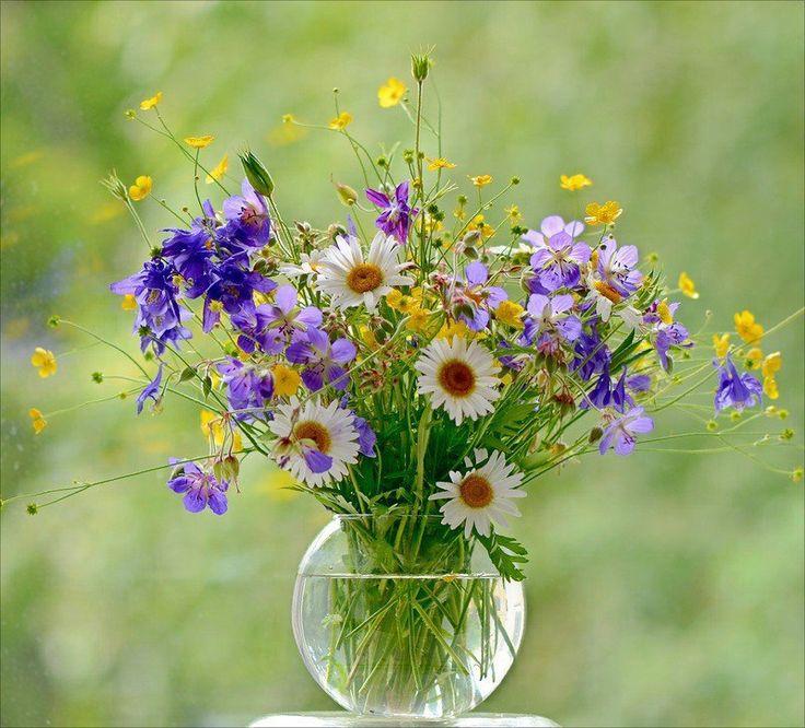 Полевые цветы открытки красивые