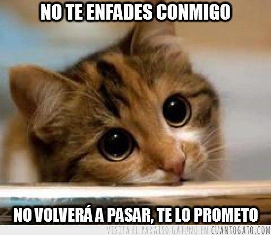 pedir-perdón27 By: Hectoralbes