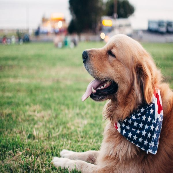 Dog Care Tips In Hindi Language Training Your Dog Golden