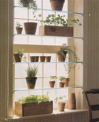 Love this idea adding glass shelves to a window in your kitchen or dinning room for herbs..