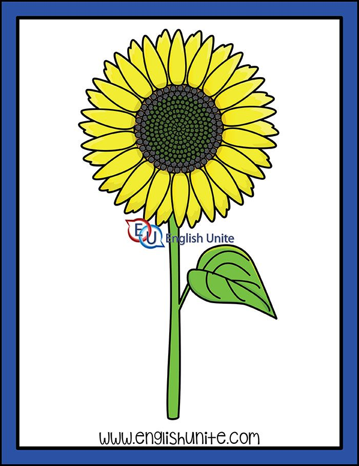 Noun Flower Sunflower English Unite Clip Art Art White Image