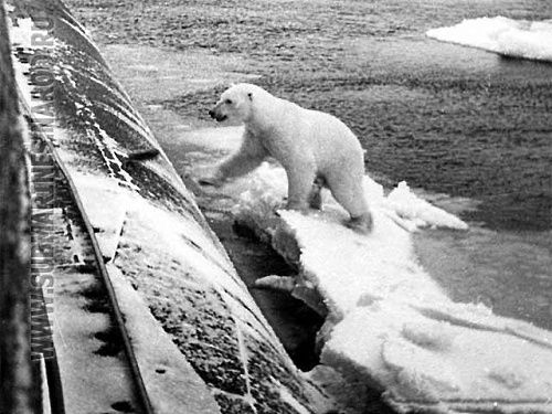 The fearless Polar Bear:     Polar Bear and Russian Submarine.     Near the North Pole (Apr. 27, 2003) — During Exercise ICEX 2003, the Seawolf-class attack submarine USS Connecticut (SSN 22)