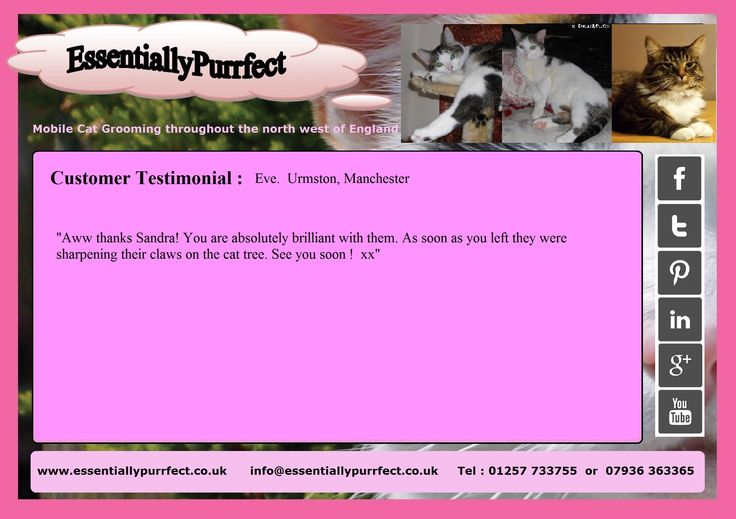 Customer Testimonial of EssentiallyPurrfect #mobile #cat #catgrooming session.  Eve #Urmston #Manchester.  Great manicure session, chicks !