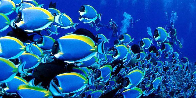 Εκατοντάδες... Ντόρι ψάχνουν τον Νέμο τους! -   Φωτογραφική μαγεία από τους βυθούς των ωκεανών