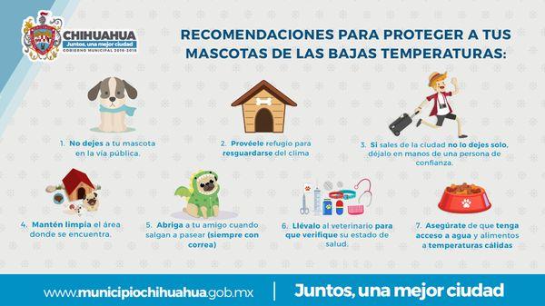 Emite Gobierno Municipal recomendaciones para cuidado de mascotas en temporada invernal | El Puntero