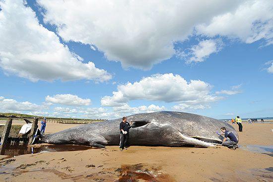 baleia tubarao - Pesquisa do Google