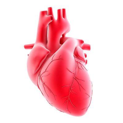 هل جلطة القلب تتكرر ما هي اعراضها وكيفية الوقاية منها Cardiovascular System Thorax Fatty Acids