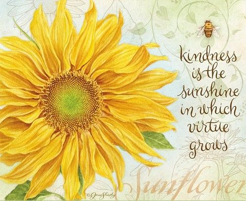 Best ideas about sunflower pictures on pinterest
