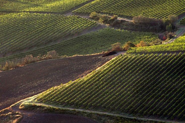 Paths among the vineyard. Around Montepulciano. Another nature walk that you can book on our site Sentieri tra i vigneti nei pressi di Montepulciano. Un esempio di passeggiata guidata che potete prenotare sul nostro sito