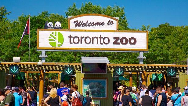 トロント動物園は、7 つの生息地域を再現した環境で、世界中から集められた陸と水の生きものが暮らすカナダ最大の動物園です。