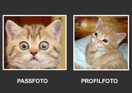 Passfoto - Profilfoto - Win Bild