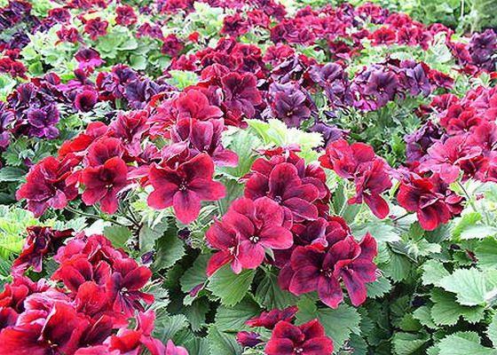 Краснодар купить рассаду, кусты, цветы, озеленение дача купить картину цветы в спб