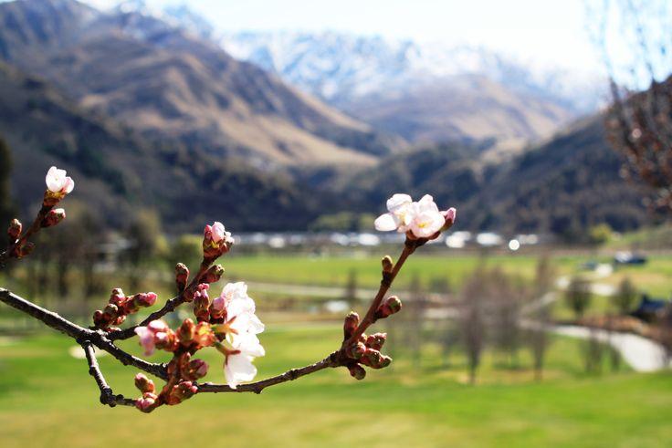 Spring at Millbrook Resort