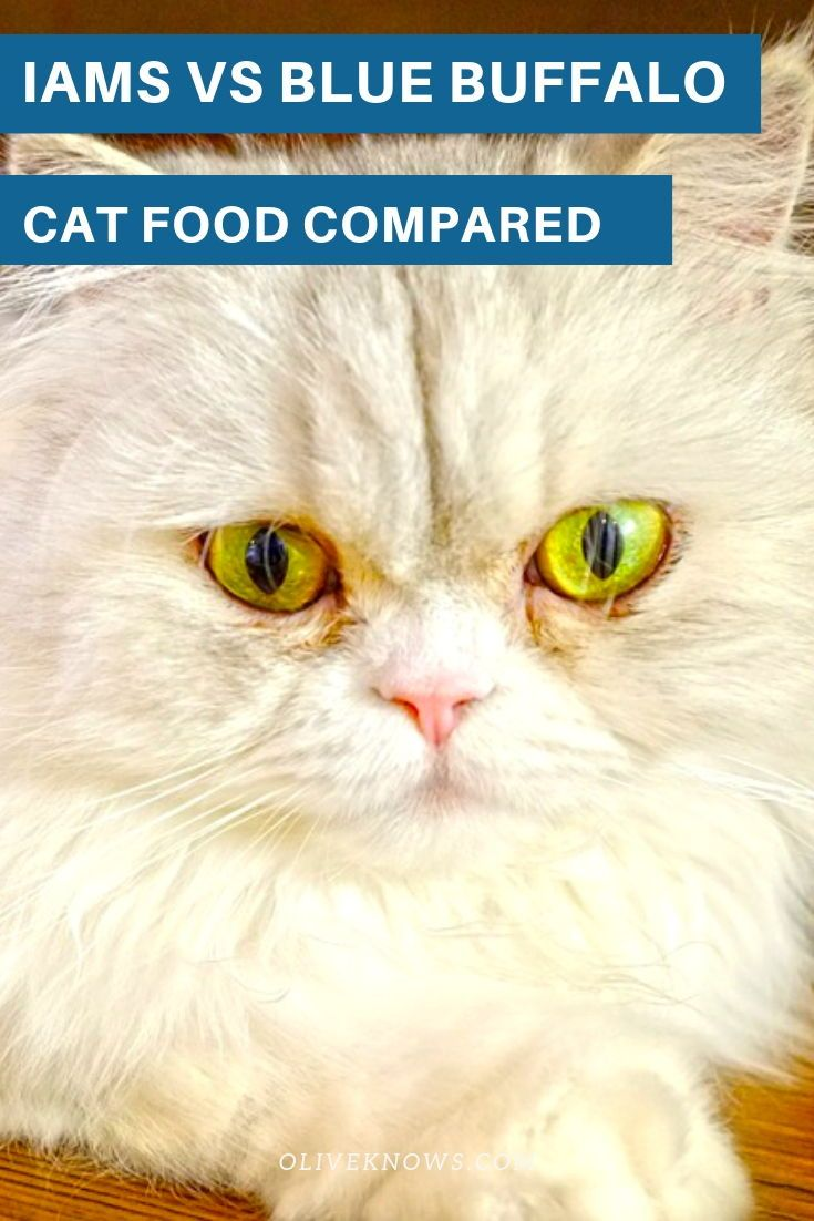 Iams Vs Blue Buffalo Cat Food Compared Which Is The Best Oliveknows Cat Food Cat Food Reviews Cat Food Brands