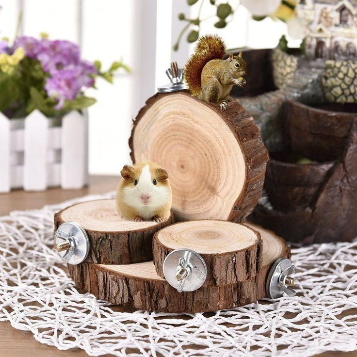 Awtang Wooden Shelf Perch Toy for Syrian