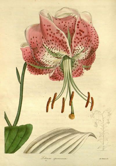 ilustracion botanica pdf - Buscar con Google