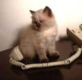 Cat Behavior: 12 Weird Cat Behaviors Explained