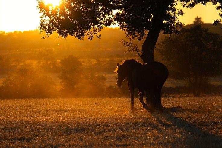 500px / magic horse by DomeniCo Donvito