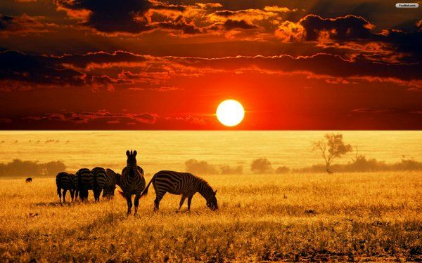 """Veld is land that is unique to southern Africa and is an open plain with little to no human interference. """"About you there is grass and bracken, and you may hear the forlorn crying of the titihoya, one of the birds of the veld."""" I felt this picture represented the beauty of the veld and the wildness of it, as it remains untouched by humans."""