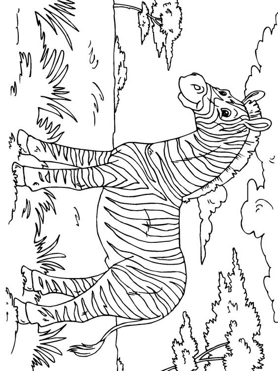 98 Best Images About Wild Animals Coloring Pages On