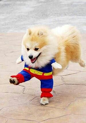 hi-yah!Funny Dogs, Halloween Costumes, Dogs Costumes, Cat Costumes, Puppie, So Funny, Little Dogs, Pets Costumes, Animal