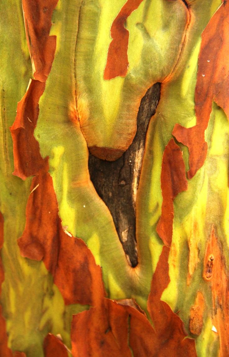 les 247 meilleures images du tableau corces d 39 arbres sur pinterest ecorce cortex surr nalien. Black Bedroom Furniture Sets. Home Design Ideas