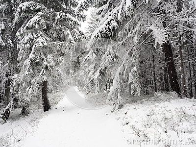 The path in winter forest