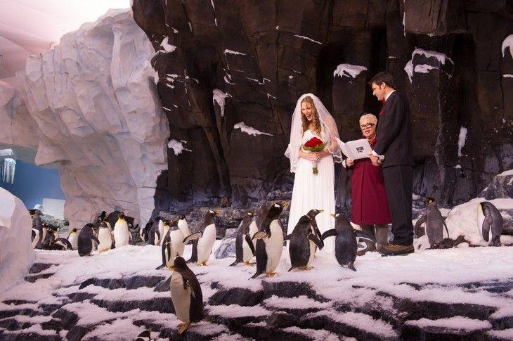 Los pingüinos siempre son los invitados mejor vestidos