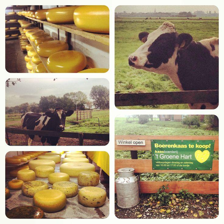 Kom Eten met een Bonnenboekje in oktober en krijg boerenkaas cadeau van Kaasboerderij Het Groene Hart