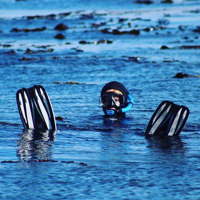 Loving sunny ocean flopping weather #snorkelling #ocean #splashteamnz #underwaterisourworld #atlantis #seac #kelpforest #fun #newzealand #karitane #dunedin