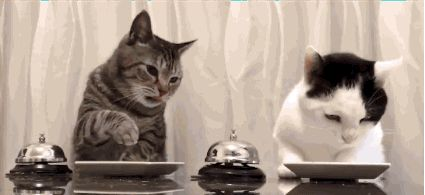All hail the new lords of the internet. | Stop What You're Doing And Watch These Cats Ringing A Bell For Food