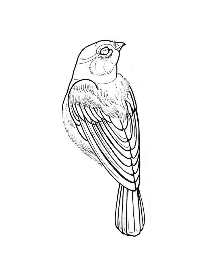 Pin On Bird Tattoos