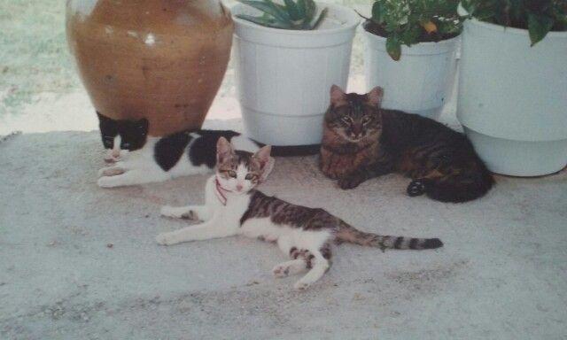 Rois family 😻