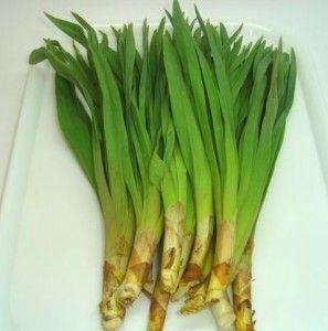 Çiriş Otu – Sarı Zambak Faydaları ve Yemekleri - 1 Organik