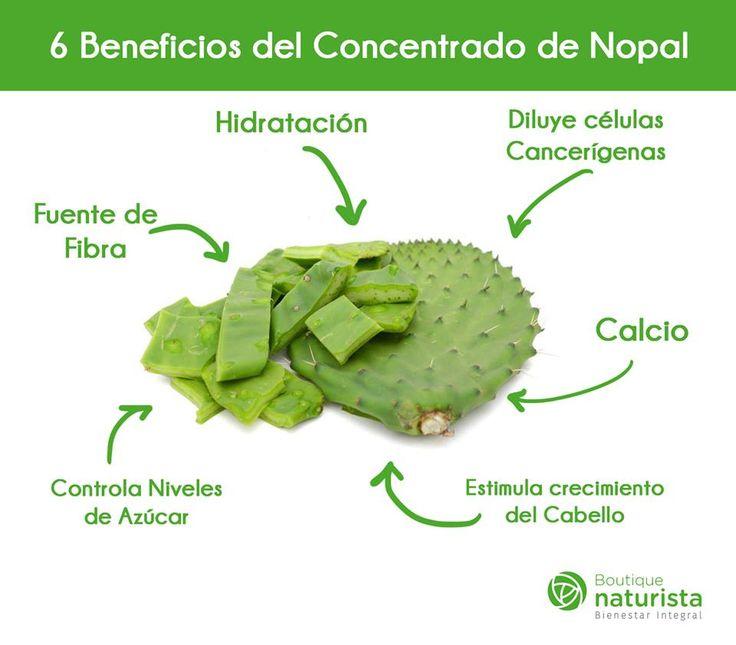 6 Beneficios del Concentrado de Nopal