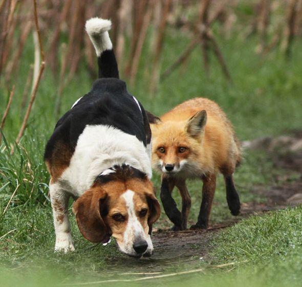 The World's Worst Hunting Dog