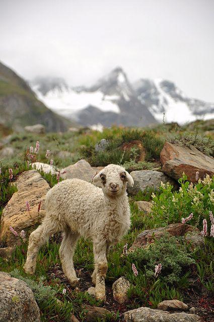 Cute companion on a trek trail in northern Pakistan.