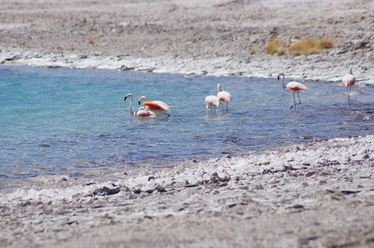 Salar de Pedernales: ¿soy exorreico a la fuerza? | Geología Ambiental Chile