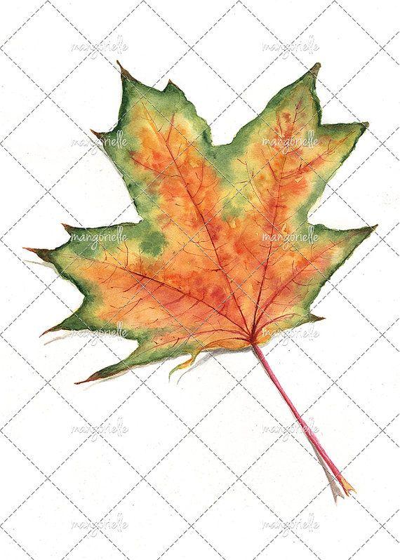 For me maple leaves are a colorful autumn miracle and I adore painting them! :) #теплаяосень #colorsofautumn #watercolorpaint #schmincke #осенниелистья #кленовыйлист #archespaper #акварель #клен #природа #лист #botany #watercolours #aquarela #illustrationart #краскиосени #aquarell #mapleleafs #maple #leaves