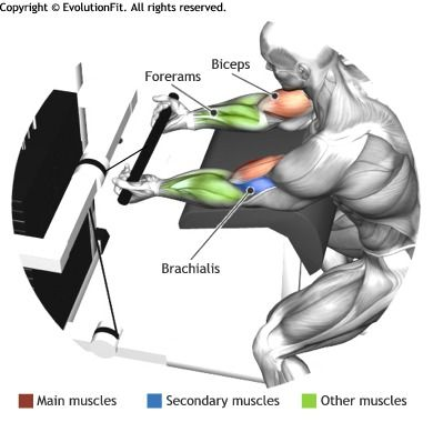 BICEPS -  CABLE PREACHER CURL