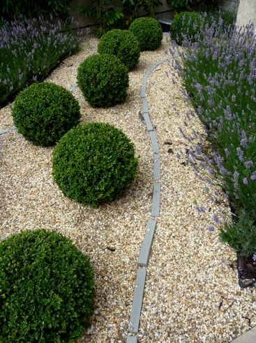 This combo of boxwood and lavender is what we'll do in the front of our house.