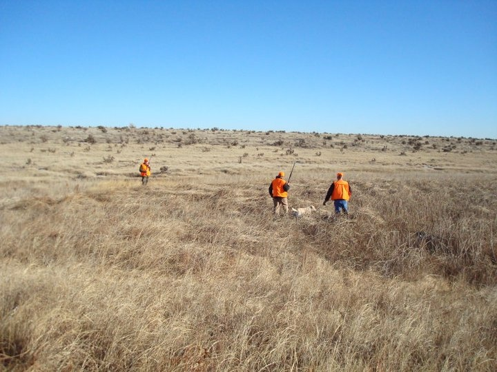 Upland field hunting at Chico Basin Ranch, Colorado. #BoxTCowboys ...