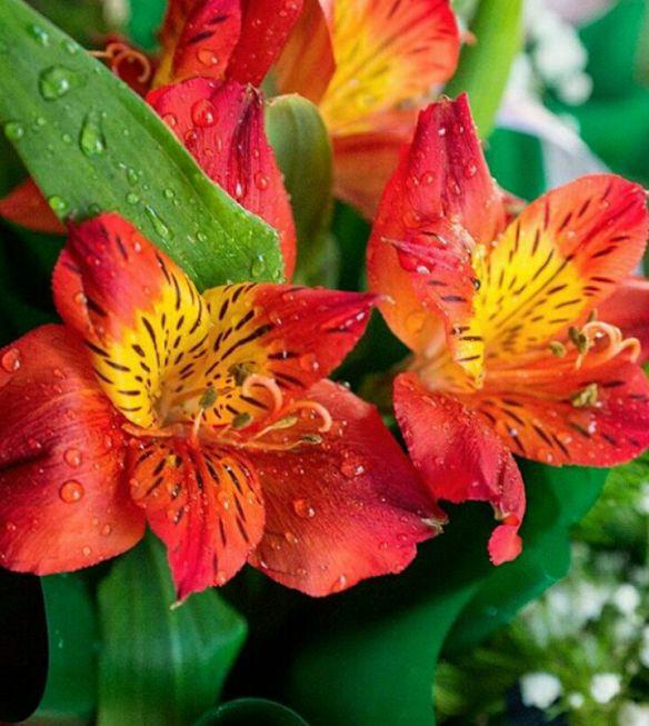 mini jardim quanto custa:1000 ideias sobre Flores Da Primavera no Pinterest