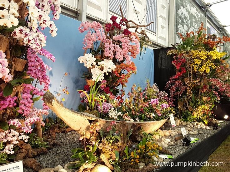 Vacherot & Lecoufle, a specialist French nursery from Boissy St Leger, in France, were awarded a Gold Medal for their amazing display of orchids at The RHS Chelsea Flower Show 2016.