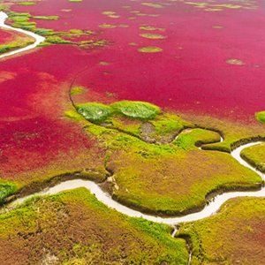 365 WONDERS OF THE WORLD: #146  Panjin Red Beach is where tourists flock to see the stunning Chinese beach turn crimson. It is also based in the biggest wetland and reed marsh in the world  Read more>> http://www.travelstart.co.za/lp/qingdao/flights  #travelstart #365wondersoftheworld #china #asia