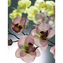 Desideri un'orchieda? Crea il tuo mazzo di orchidee personalizzato. Sono disponibili diversi colori, per saperne di più vieni su http://www.dbshop.it/shopping/prodotti-popolari/crea-il-tuo-mazzo-di-orchidee.html